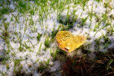 Free Leaf, Grass, Moths And Butterflies, Fauna Stock Photo - 116733690
