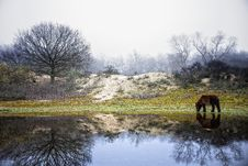 Free Winter, Nature, Reflection, Tree Royalty Free Stock Photo - 116733745