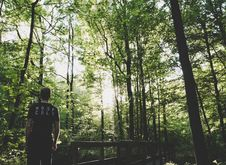 Free Man Standing On Forest Trees Near Small Bridge Stock Photos - 116776163