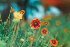 Free Selective Focus Photography Of Red And Yellow Petaled Flower Royalty Free Stock Image - 116776226