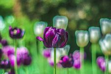 Free Purple Flowers Stock Images - 116776384