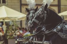 Free Two Black Horses Wearing Accessories Stock Images - 116776394