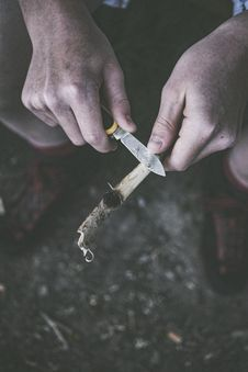 Free Person Holding Pocket Knife And Tree Branch Stock Images - 116776594