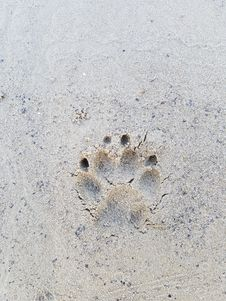 Free Sand, Footprint, Organism, Snout Stock Image - 116790441