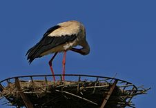 Free Stork, Bird, White Stork, Ciconiiformes Stock Photo - 116790500