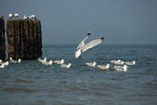 Free Water, Sea, Bird, Seabird Stock Images - 116790944