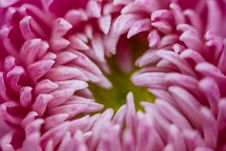 Free Macro Photography Of Flower Petals Royalty Free Stock Photography - 116854107