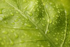 Free Closeup View Of Green Leaf With Rain Drops Royalty Free Stock Photos - 116854108
