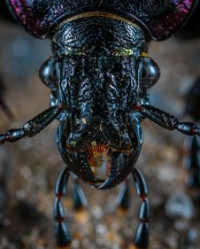 Free Closeup Photo Of Black Insect Stock Image - 116854171