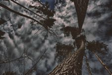 Free Photo Of Gray Trees With Clouds Royalty Free Stock Photo - 116854185