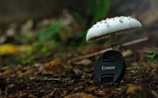 Free White Button Mushroom With Black Canon Camera Zoom Lens Cover Stock Photography - 116854212