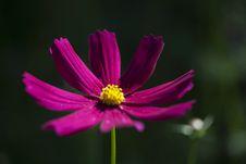 Free Macro Photography Of Purple Petaled Flower Stock Photos - 116854303