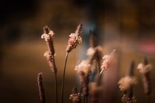 Free Plant Selective Focus Photography Stock Photo - 116854340