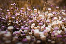 Free Selective Focus Photography Of Purple And White Bed Of Flowers Stock Photos - 116854413