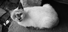 Free Cat, Black And White, Black, Fauna Royalty Free Stock Images - 116884369