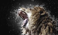 Free Wildlife, Water, Roar, Phenomenon Stock Images - 116884894