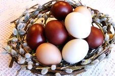 Easter Dyed Eggs In A Pussy-willow Nest Royalty Free Stock Image