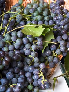Free Grapes In A Basket Royalty Free Stock Images - 11691219