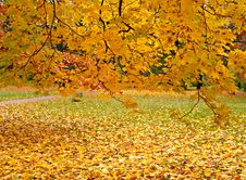Autumn At The Park Royalty Free Stock Image