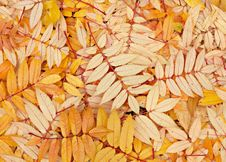 Free Yellow Leaves Stock Photo - 11695810