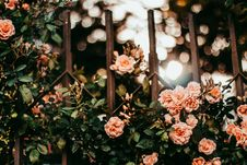 Free Pink Petaled Flowers On Metal Gate Grills Royalty Free Stock Photos - 116927828