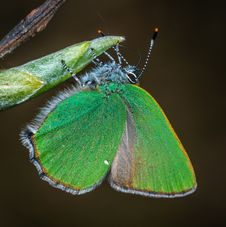 Free Closeup Photography Of Green And Brown Moth Perched On Green Leaf Royalty Free Stock Photography - 116927877
