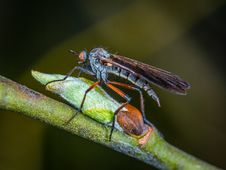 Free Selective Focus Photography Of Robber Fly Perched On Green Sprout Royalty Free Stock Photos - 116927898