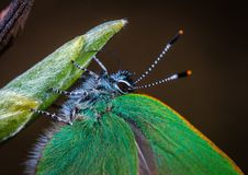 Free Macro Photo Of Green Moth On Leaf Plant Stock Images - 116927914