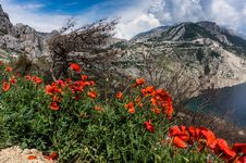 Free Red Poppies Beside A Body Of Water Under Blue And White Cloudy Sky Stock Photography - 116927982