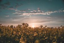 Free Flower Field Under Sunset Stock Image - 116984361