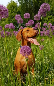 Free Tan Dog Sits On Flower Field At Daytime Royalty Free Stock Image - 116984396