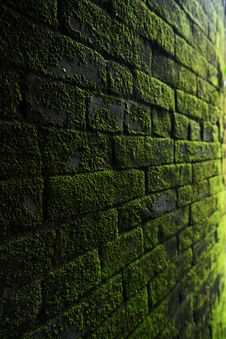 Free Photography Of Bricks Covered With Moss Stock Image - 116984401