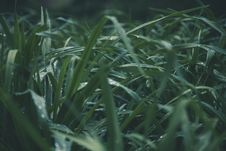 Free Shallow Focus Photo Of Green Grass Royalty Free Stock Images - 116984449