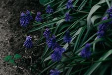 Free Shallow Focus Photo Of Green Plant With Purple Flowers Stock Photos - 116984513