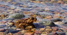 Free Close-Up Photography Of Frog Stock Photography - 116984652