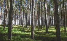 Free Photography Of Tree Trunks Stock Photography - 116984672