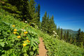 Free Hiking Trail In The Mountains Royalty Free Stock Images - 1179649