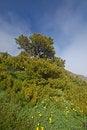 Free Mountain Meadow Royalty Free Stock Photo - 1179935