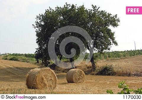 Free Tuscany Countryside Stock Photo - 1170030