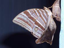 Free Newborn Butterfly Stock Photos - 1171453