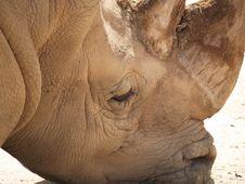 Free Rhino Head Stock Photography - 1172872