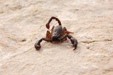 Free Scorpio Stock Images - 1173084