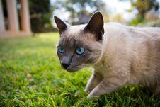 Free Cat Stock Photos - 1173163