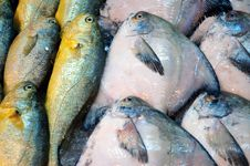 Fish At The Market