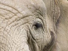 Free Old Elephant Stock Photo - 1177080