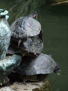 Free Three Turtles Royalty Free Stock Photo - 1177365