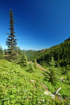 Free Mountain Meadow Royalty Free Stock Photo - 1179595