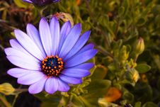 Free Gerbera Stock Photo - 1179790