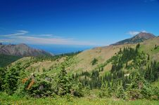 Free Mountain Meadow Stock Photos - 1179963