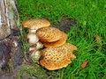 Free Wild Mushrooms Stock Photography - 11705302